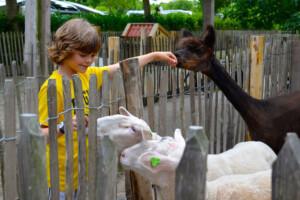 Outdoor BSO kinderboerderij 3